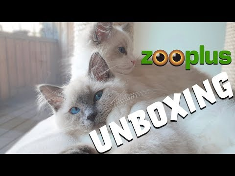 Zooplus HAUL - unboxing with our RAGDOLL kittens!