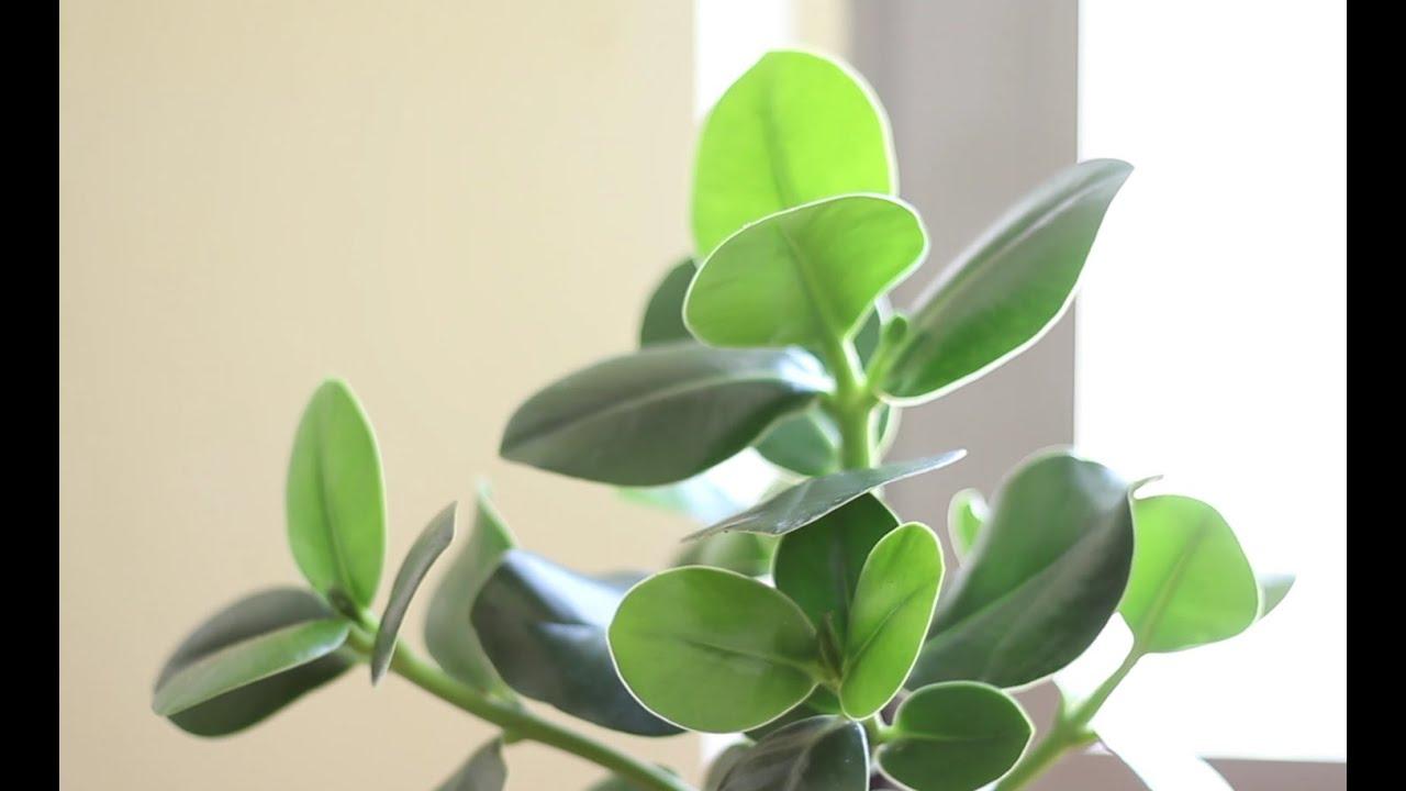 Cómo dar brillo a las plantas | facilisimo