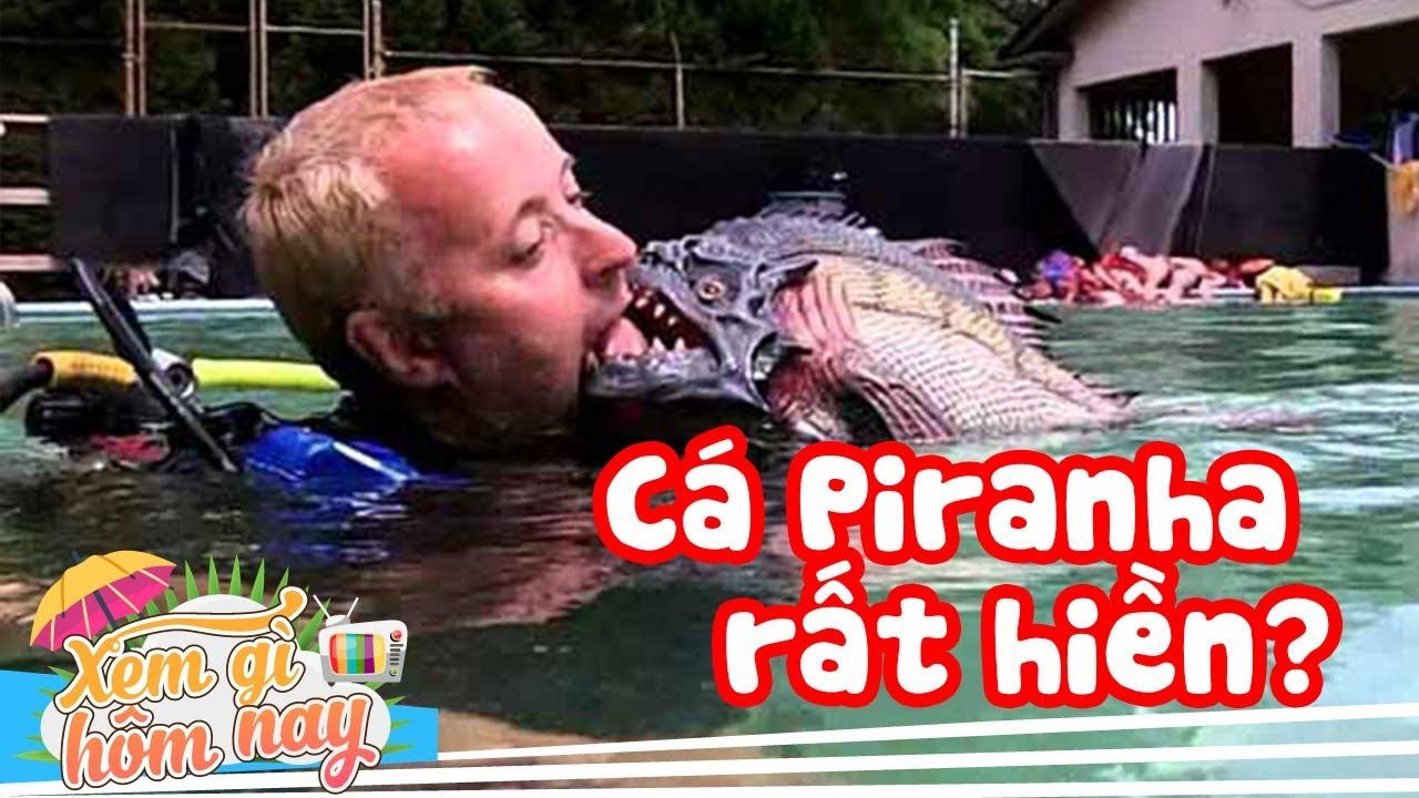 Cá Piranha Có Thực Sự Ăn Thịt Người? 10 Cú Lừa Kinh Điển Của HOLLYWOOD