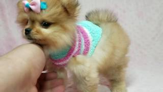 Puppy Heaven- Teacup & Toy Puppies for Sale - ViYoutube com