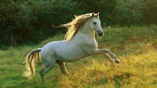 Animal for Kids - Horse for kids - Lovely horse for children - video for kids