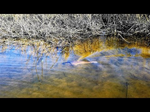 Catching Redfish And Making Waves In A Texas Marsh (Sight Casting In Skinny Water)