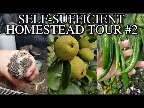 Self Sufficient Homestead Walk Around Tour #2 VLOG
