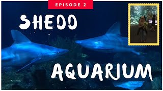 Shedd Aquarium Walkthrough | Chicago Episode 2 May 2019