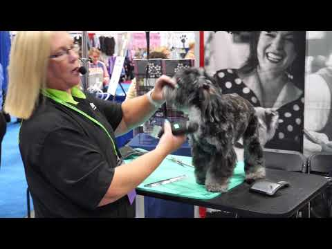 Aussiedoodle Head with Tammy Siert
