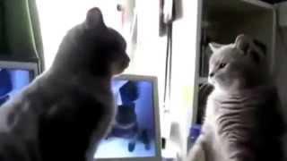 Смешные кошки танцуют  Лучшие видео приколы с кошками  funny cats videos