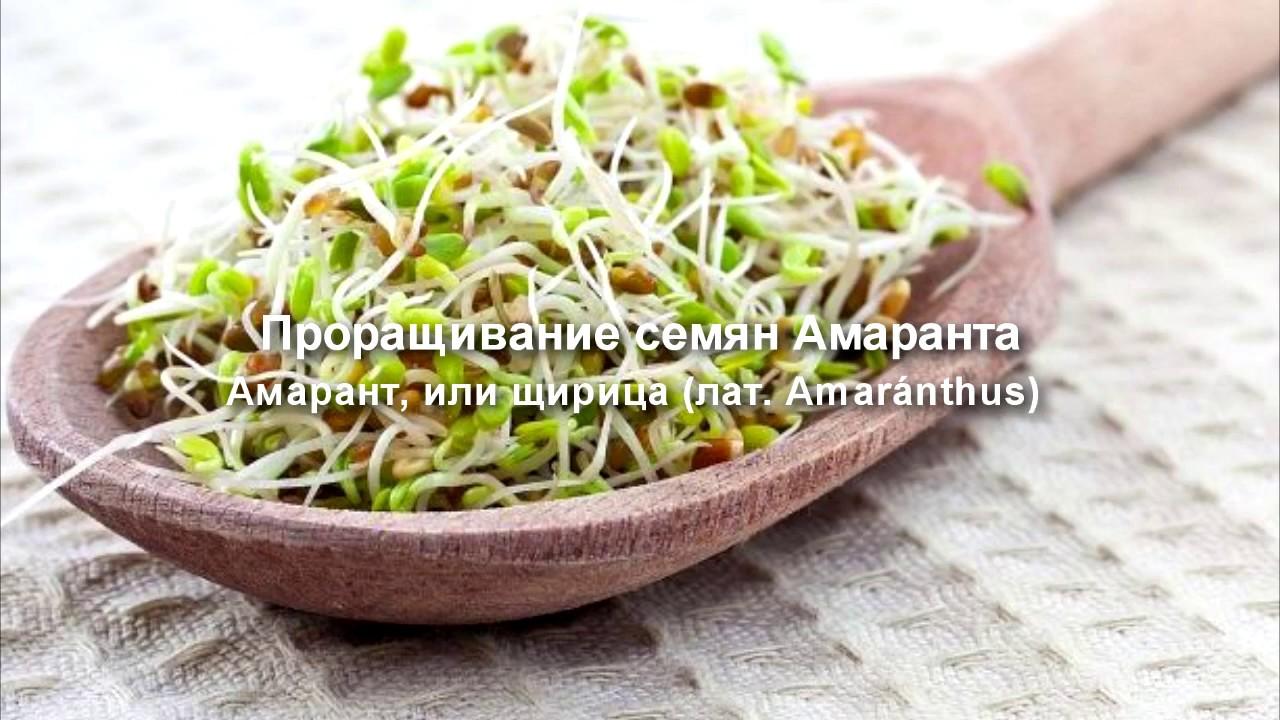 Амарантовые блинчики   Gluten free crepes - YouTube