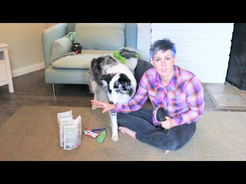 Tip for teaching your dog to like grooming - dog training