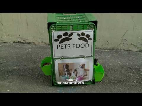 Animais de rua alimentados