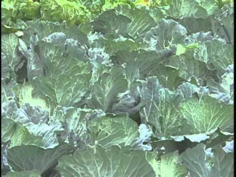 作物病害之非農藥防治介紹 | Doovi