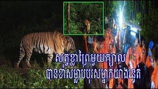 ខ្លាព្រៃមួយក្បាលខាំសម្លាប់បុរសម្នាក់ស្លាប់ពេលកំពុងបោះជំរុំជាមួយមិត្តភក្តិពីរនាក់|Khmer News Sharing