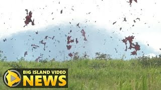 Hawaii Volcano Eruption Update - Sunday Afternoon (May 13, 2018)