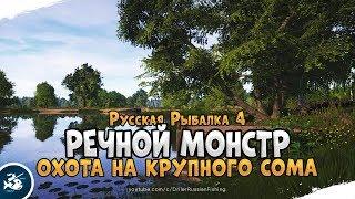 Сом на реке Ахтуба. Русская Рыбалка 4. Стрим