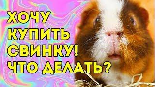 ВСЁ О МОРСКИХ СВИНКАХ ДЛЯ НОВИЧКА 🐽 #свинкишоу