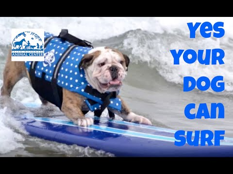 Teach Your Dog To Surf - Surf Dog Lessons in San Diego
