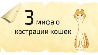 КАСТРАЦИЯ И СТЕРИЛИЗАЦИЯ КОШЕК. 3 мифа об операции по кастрации кошек
