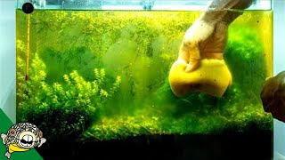 do-we-really-need-carbon-in-a-fish-tank