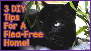 How to Get Rid of Cat Fleas in Your Home! 3 DIY Tips For a ...