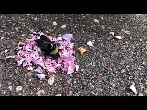 Baffling Viral Video Shows Ants Carrying Flowers to a Dead Bee