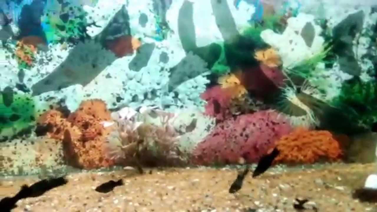 Fish aquarium in bhopal - Fish Aquarium In Bhopal
