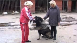 Все о породе кавказкой овчарки и о алабае, среднеазиатской овчарки www.r-risk.ru