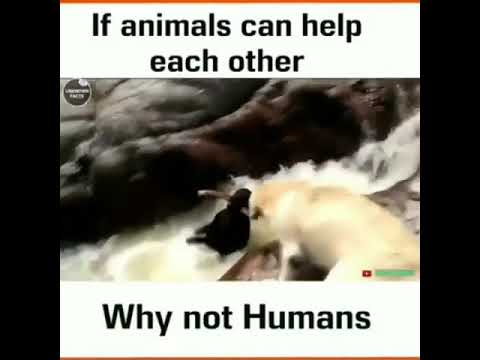 Animals helping others animals , if animals can help each others why not humans