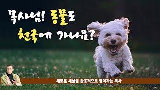 목사님! 애완 동물도 천국에 갈 수 있나요?