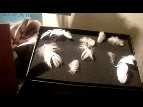 Angel Signs  finding feathers