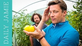 LET'S TALK ABOUT TOMATOES! | Jamie Oliver