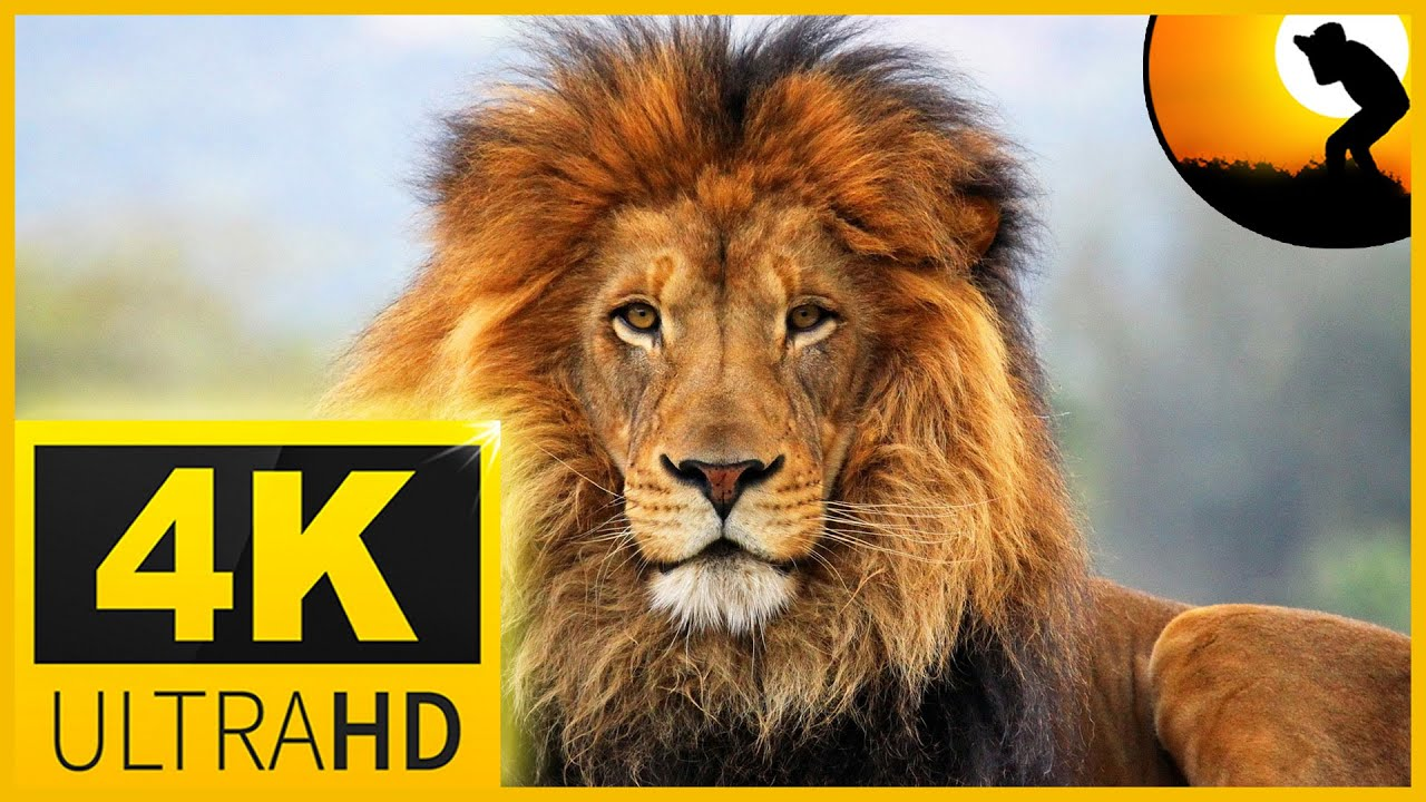 4K VIDEO ULTRAHD AFRICAN WILDLIFE  WITH  RELAXATION MUSIC FOR 4K OLED TV - 2 HR