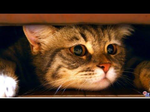 После смерти хозяйки кота выгнали на улицу - а дальше произошло нечто удивительное…