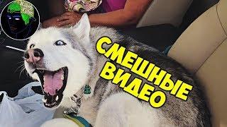 Приколы с животными. Смешная озвучка животных. Смешные животные | Смешные видео【Habiq Tube】