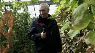Ларгус Кросс с ДОСТАВКОЙ НА ДОМ !!! Волгоград. || Ставр Авто подбор г. Тольятти ||