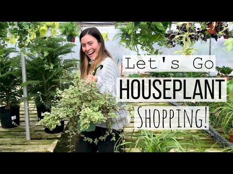 Come Houseplant Shopping with Me! | Large Indoor Plant Haul!