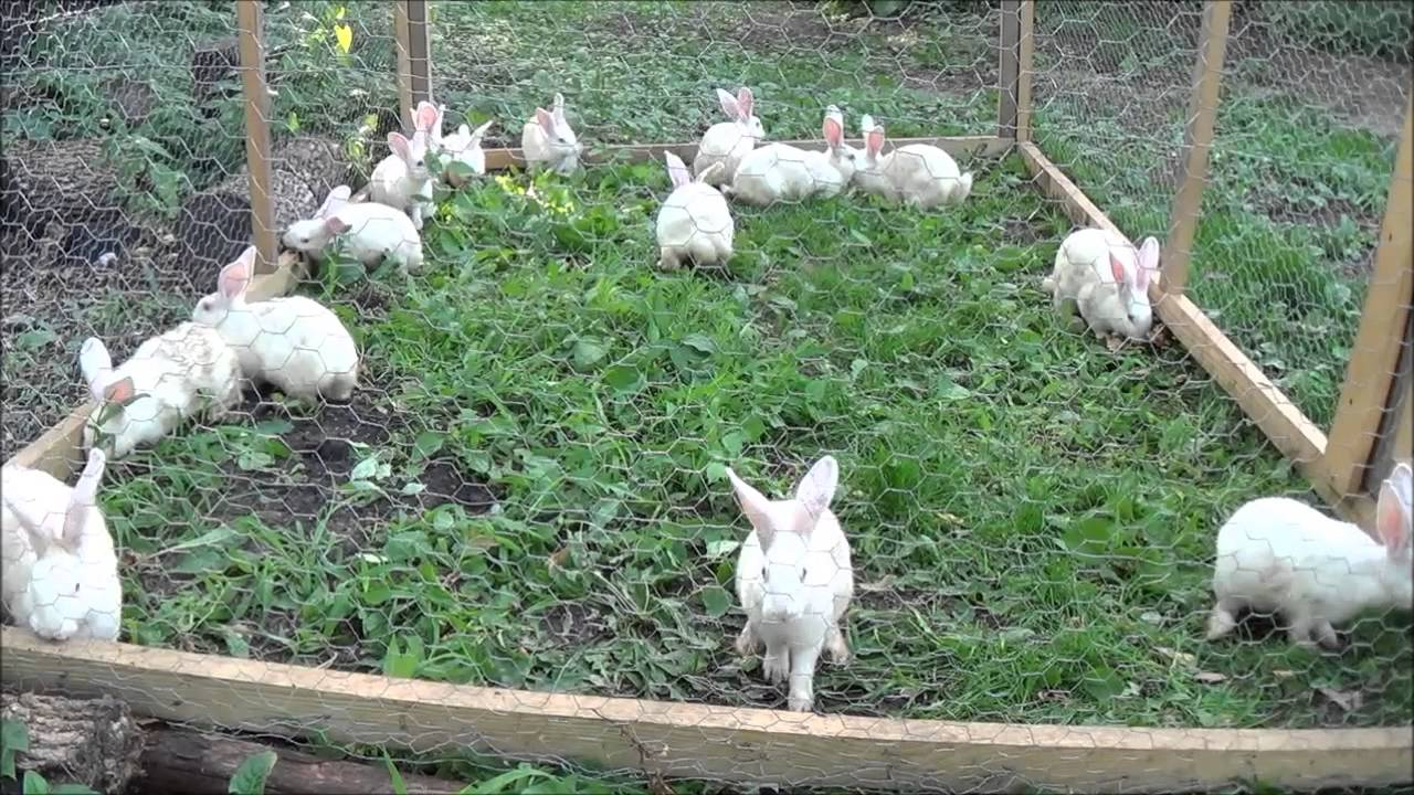 Meat Rabbits, Solid Ground? Plus Chores And Cleaning The ...