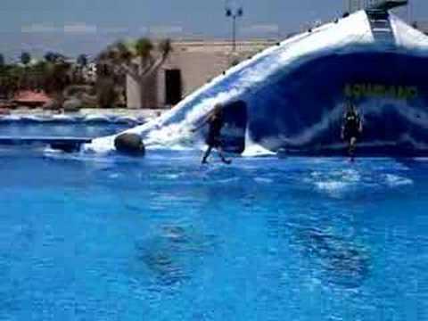 Dolphin show tenerife aquapark part 1 youtube - Aqua tenerife ...