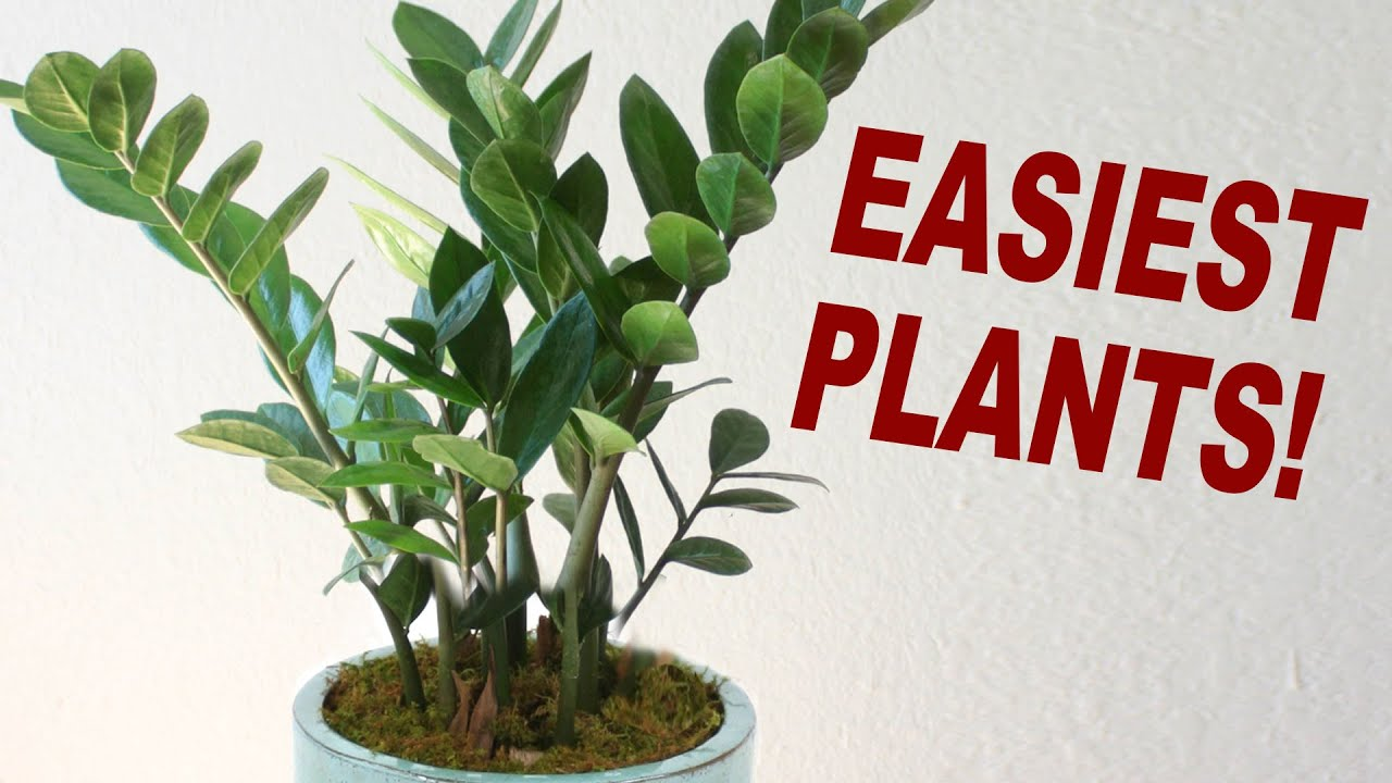 Plants For Plant Killers