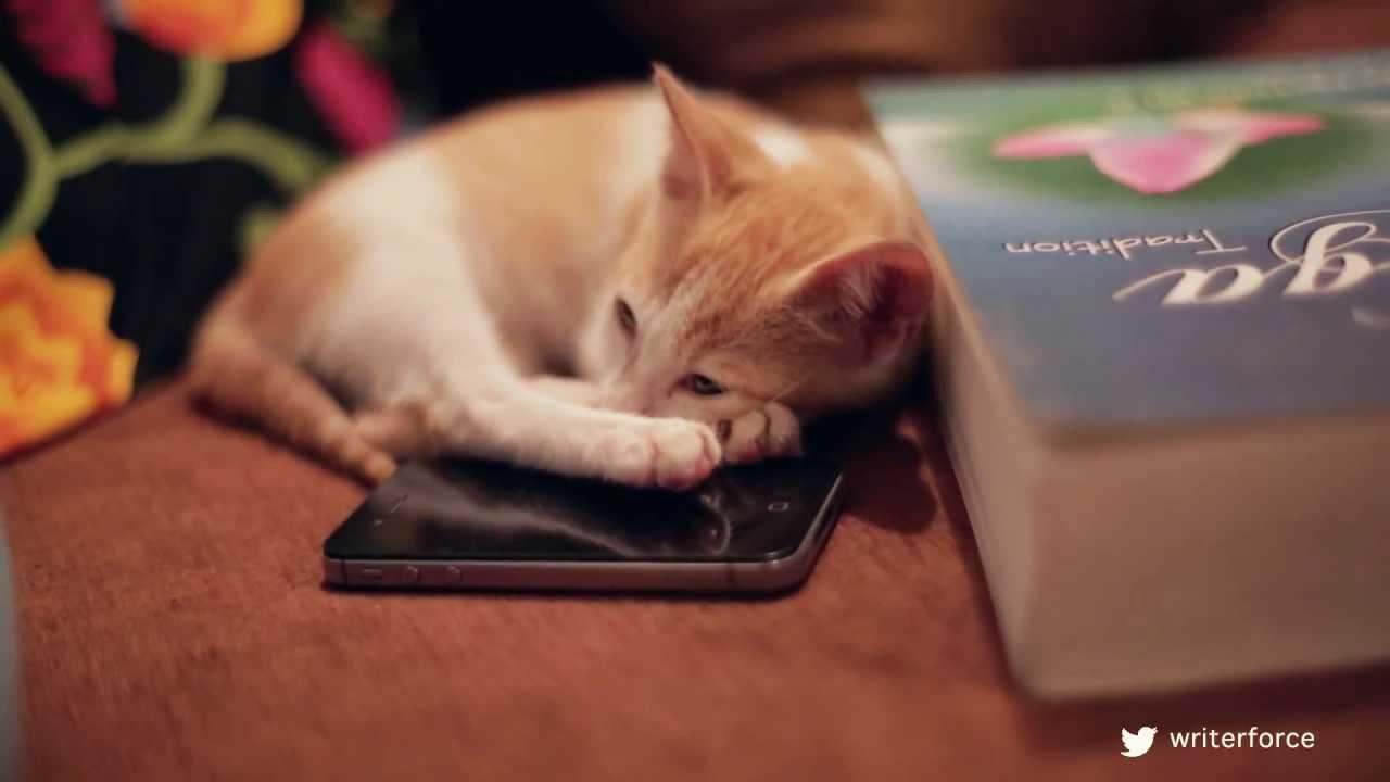 Eckhart Tolle The Zen Cat Youtube