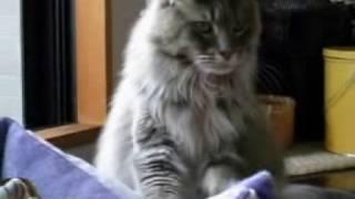 愛猫のペコリくんとライたんの動画をビデオクリップ風に編集してみました。