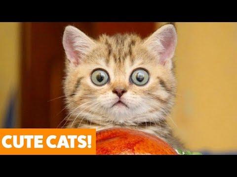 Funny Adorable Cats | Funny Pet Videos