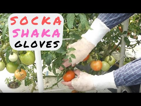 Protect Your Hands From Sun Damage With Socka Shaka Gloves