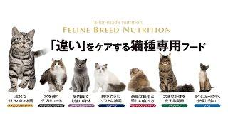 ロイヤルカナン 「違い」をケアする猫種専用フード