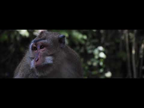 """the poetry of earth"" Short Cinematic Bali Animals"