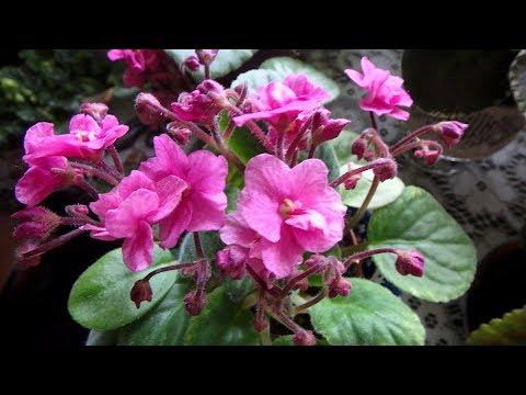 Комнатные растения. Интернет магазин хайбокс предлагает популярные и редкие экзотические виды комнатных растений и цветов. На сайте представлены большие, маленькие и средние зеленые питомцы в горшках в разных ценовых категориях. Домашние комнатные растения купить по интернету.