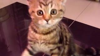 Смешные котята 17, подборка 2013-2014