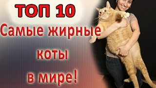 Самые толстые коты. ТОП 10 / Fattest cats TOP 10