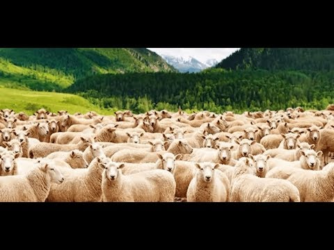 Lost Sheep Of The House Of Israel - Part 1