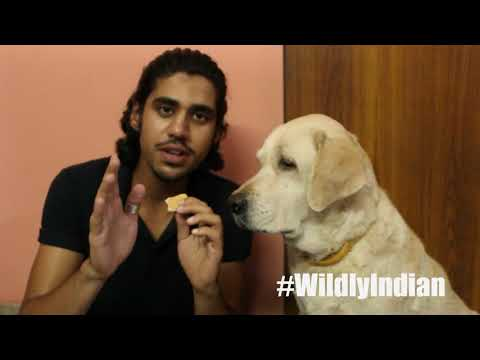 HOW TO CONTROL YOUR DOG | 'STAY' Command | Wildly Indian