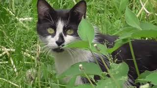 кот живущий под кустом