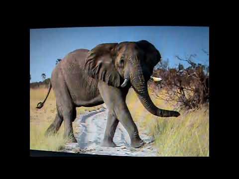 Elephant Safari-Composition by Thomas Bellacosa